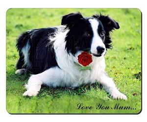 Border Collie + Rose
