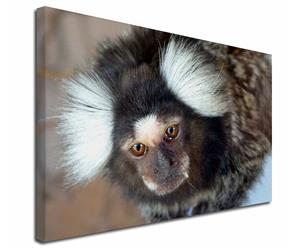 Click to see all products with this Marmoset.