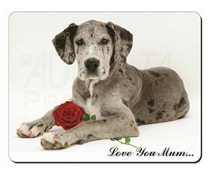 Great Dane with Rose