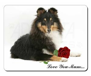 Sheltie with Rose