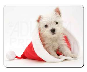 West Highland Terrier Dog, AD-W3