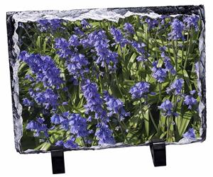 Click Image to See All 38 Different Products Available with this Bluebell Print