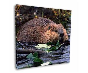 Click to see all products with this Beaver.