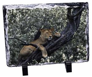 Click Image to See All 38 Different Products with this Lioness in Tree Printed Onto