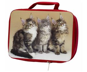 Click to see all products with these Maine Coon Kittens.