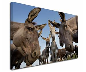 Click Image to See Donkey Images and All the Different Products with Donkeys