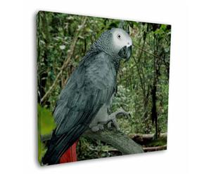 African Grey Parrot, AB-PA76
