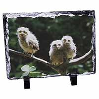 Baby Owls on Branch Photo Slate Christmas Gift Ornament