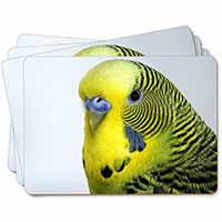 Yellow Budgerigar, Budgie Picture Placemats in Gift Box