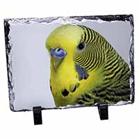 Yellow Budgerigar, Budgie Photo Slate Photo Ornament Gift
