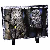 Stunning Owl in Tree Photo Slate Christmas Gift Ornament