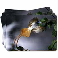 Humming Bird Picture Placemats in Gift Box