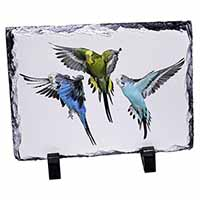 Budgerigars, Budgies in Flight Photo Slate Christmas Gift Idea