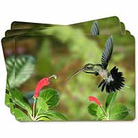 Green Hermit Humming Bird Picture Placemats in Gift Box