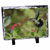 Green Hermit Humming Bird Photo Slate Photo Ornament Gift