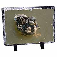 An Inquisitive Little Duck Photo Slate Christmas Gift Idea