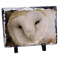 White Barn Owl Photo Slate Photo Ornament Gift