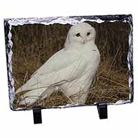 White Barn Owl Photo Slate Christmas Gift Idea