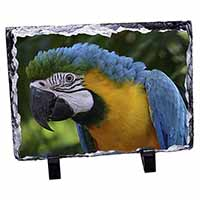 Blue+Gold Macaw Parrot Photo Slate Christmas Gift Idea