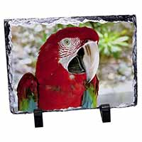 Green Winged Red Macaw Parrot Photo Slate Photo Ornament Gift