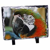 Face of a Macaw Parrot Photo Slate Photo Ornament Gift