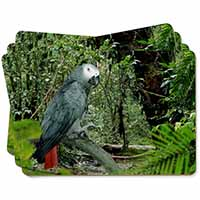 African Grey Parrot Picture Placemats in Gift Box