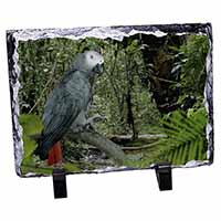 African Grey Parrot Photo Slate Christmas Gift Idea