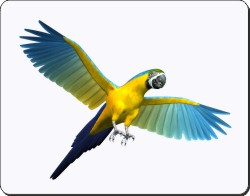 Parrot in Flight, AB-PA9