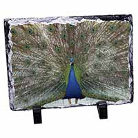 Rainbow Feathers Peacock Photo Slate Photo Ornament Gift