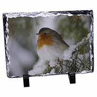 Robin Red Breast in Snow Tree Photo Slate Photo Ornament Gift