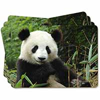 Beautiful Panda Bear Picture Placemats in Gift Box