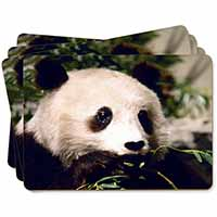 Panda Bear Picture Placemats in Gift Box