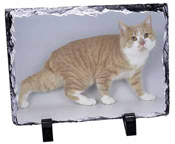 Ginger+White Manx Cat Photo Slate Christmas Gift Idea