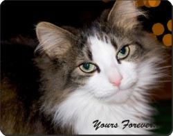 "Tabby Cat with sentiment ""Yours Forever..."", AC-10y"
