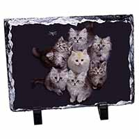 Cute Kittens+Dragonfly Photo Slate Christmas Gift Idea