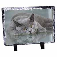 British Blue Cat Laying on Glass Photo Slate Photo Ornament Gift
