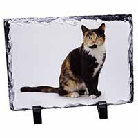 Tortoiseshell Cat Photo Slate Christmas Gift Idea