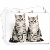 Silver Tabby Kittens Picture Placemats in Gift Box