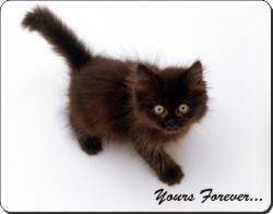 Chocolate Kitten with Sentiment, AC-134