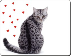 Silver Tabby Cat with Hearts, AC-140