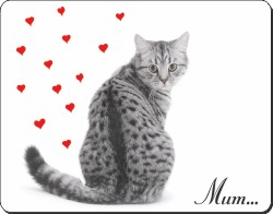 Silver Tabby Cat for Mum, AC-141