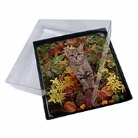4x Tabby Kitten in Foilage Picture Table Coasters Set in Gift Box