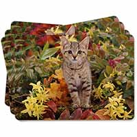 Tabby Kitten in Foilage Picture Placemats in Gift Box