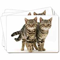 Two Brown Tabby Cats Picture Placemats in Gift Box