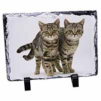 Two Brown Tabby Cats Photo Slate Photo Ornament Gift