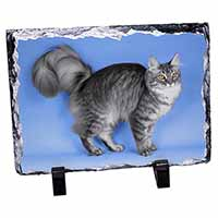 Silver Maine Coon Cat Photo Slate Photo Ornament Gift