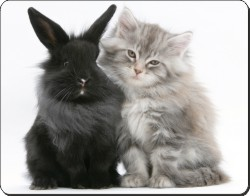 Silver Kitten and Rabbit, AC-161