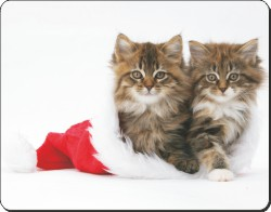 Kittens in Christmas Hat, AC-163