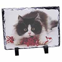 Kitten with Red Ribbon Photo Slate Photo Ornament Gift
