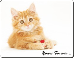 Ginger Kitten with Sentiment, AC-169